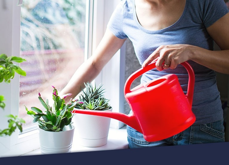 A hand watering a plant using a watering can